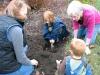 daffodil-planting1