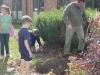 daffodil-planting10