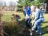 daffodil-planting4