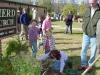 daffodil-planting7