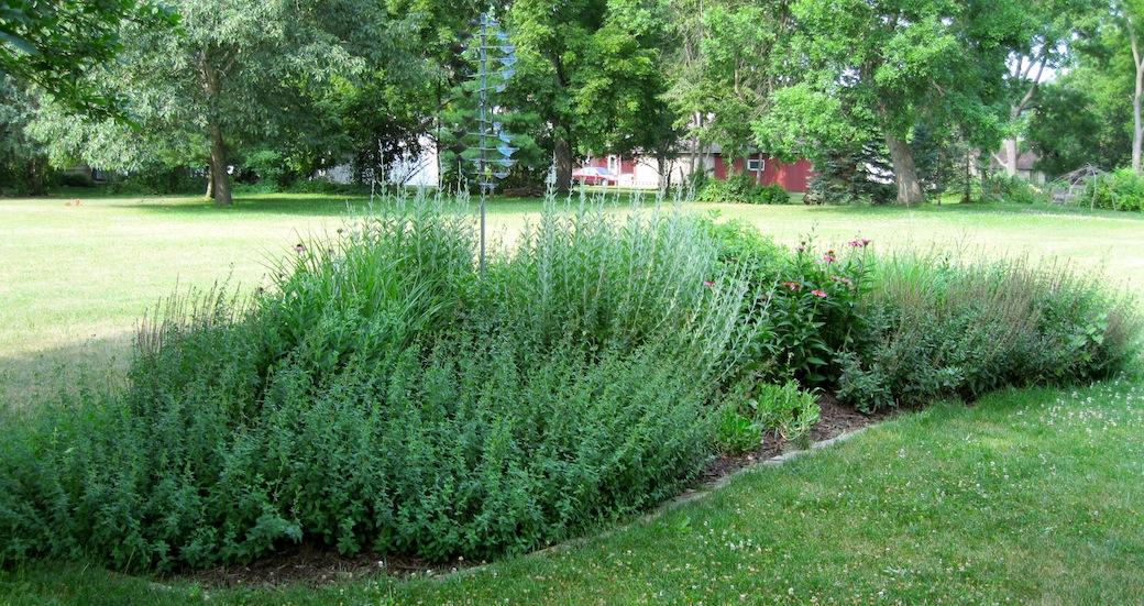 Lynette's Garden