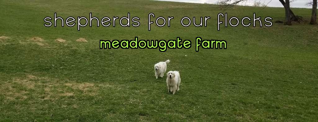 Shepherds for our Flocks!